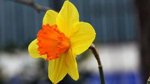 _63377285_flower.jpg