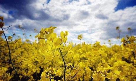 oilseed3.jpg