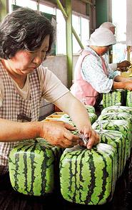 Melon_613605a.jpg