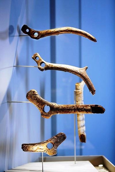 権力を象徴する鹿角の棒